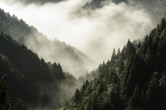 Morning sunlight come out from the mountain. Tai ping mountain in Taiwan, forest and mist in the morning Royalty Free Stock Image