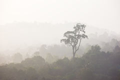 Forest with the mist in the morning ,thailand Stock Photography