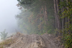 Forest& mist Royalty Free Stock Image