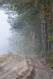 Forest& mist Royalty Free Stock Photography
