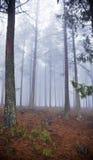 Forest Mist Stock Photos