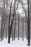 Forest with mist in winter Royalty Free Stock Photos
