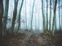 Forest in mist. Royalty Free Stock Photos