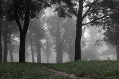 forest misty Στοκ φωτογραφία με δικαίωμα ελεύθερης χρήσης