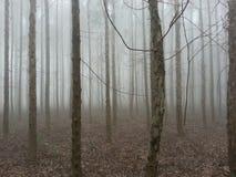 forest misty Στοκ φωτογραφίες με δικαίωμα ελεύθερης χρήσης