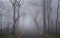 forest misty Στοκ Εικόνα