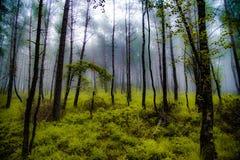 forest misty Στοκ εικόνες με δικαίωμα ελεύθερης χρήσης