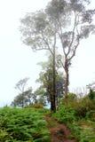 forest misty στοκ εικόνες