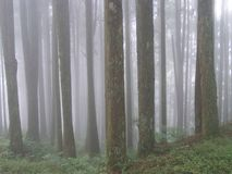 Forest in mist Royalty Free Stock Photography
