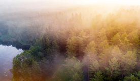 Forest at misty dawn royalty free stock photo