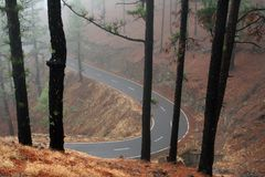 Free Forest Misty Road Royalty Free Stock Photo - 2276705