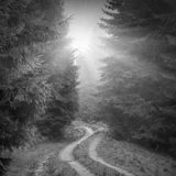 Forest misty road. Black and white Stock Photo