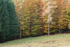 Forest Mix Foto de archivo