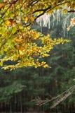 Forest Mix royaltyfri fotografi