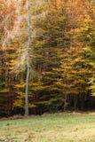 Forest Mix Imágenes de archivo libres de regalías