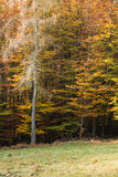 Forest Mix Royalty Free Stock Images