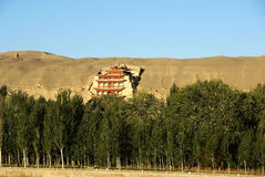Forest with mogao grottoes. Was taken in dunhuang  of china, the mogao grottoes with forest Royalty Free Stock Photography