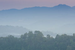 Forest at Mon Jam. Chiang Mai Thailand Stock Photography