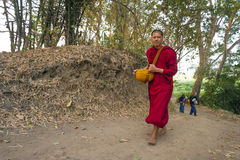 Forest Monk Stock Image