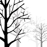Forest Monotone Royalty Free Stock Photo