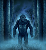 Forest Monster. Concept with a werewolf lurking as a bigfoot creature coming out of a dark scary background with a moon glow behind it as a halloween horror Stock Photos