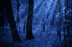 Forest on moonlit night Stock Photography