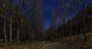 Forest moonlit.Vandam.Gabala.Azerbaijan Royalty Free Stock Photo