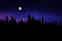 Forest Moonrise. Moonrise over pine trees in the mountains stock photography