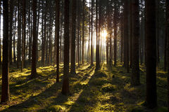 The forest in the mornig Stock Image