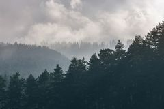 Trees peaks during foggy morning. royalty free stock photos