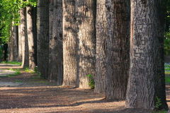 Forest in morning Royalty Free Stock Images