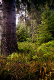 Forest and the morning light Royalty Free Stock Photos
