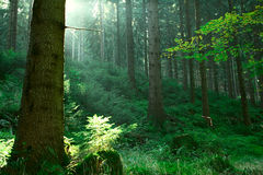 Forest and the morning light Stock Image