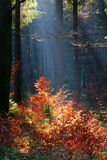 Forest and the morning light Royalty Free Stock Photography