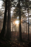 Forest in the morning Stock Photography