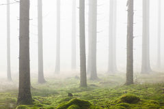 Forest with morning mist Royalty Free Stock Photos