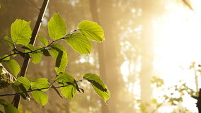 Forest morning with sun lighting leaves stock video footage