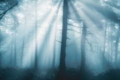 Forest at the morning with rays. Forest at the morning with sun rays royalty free stock photos