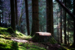 Forest in morning sunlight Stock Image