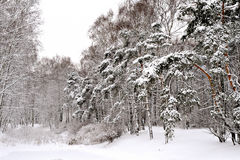 Forest in Moscow after heavy snow Stock Image