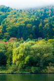 Forest on the mosel royalty free stock photography