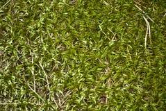 Forest moss Stock Photos
