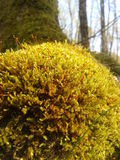 Forest Moss Photos stock