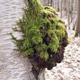 Forest Moss Lizenzfreie Stockbilder