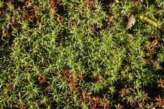 Forest Moss Immagini Stock Libere da Diritti