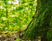 Forest Moss Royalty-vrije Stock Afbeeldingen