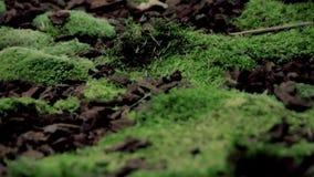 Forest_moss видеоматериал
