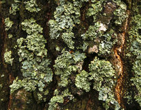 Forest Moss Photo libre de droits