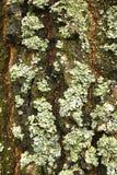 Forest Moss Photos libres de droits