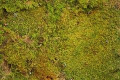 Forest Moss fotografía de archivo